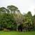 Brooklands Lawn - Acer negundo Brooklands lawn 2.