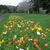 Brooklands Lawn and poppies.