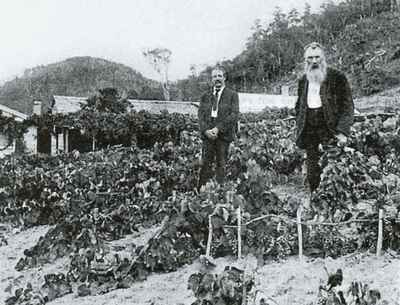 Briedecker's Vineyard, Kohukohu, 1899